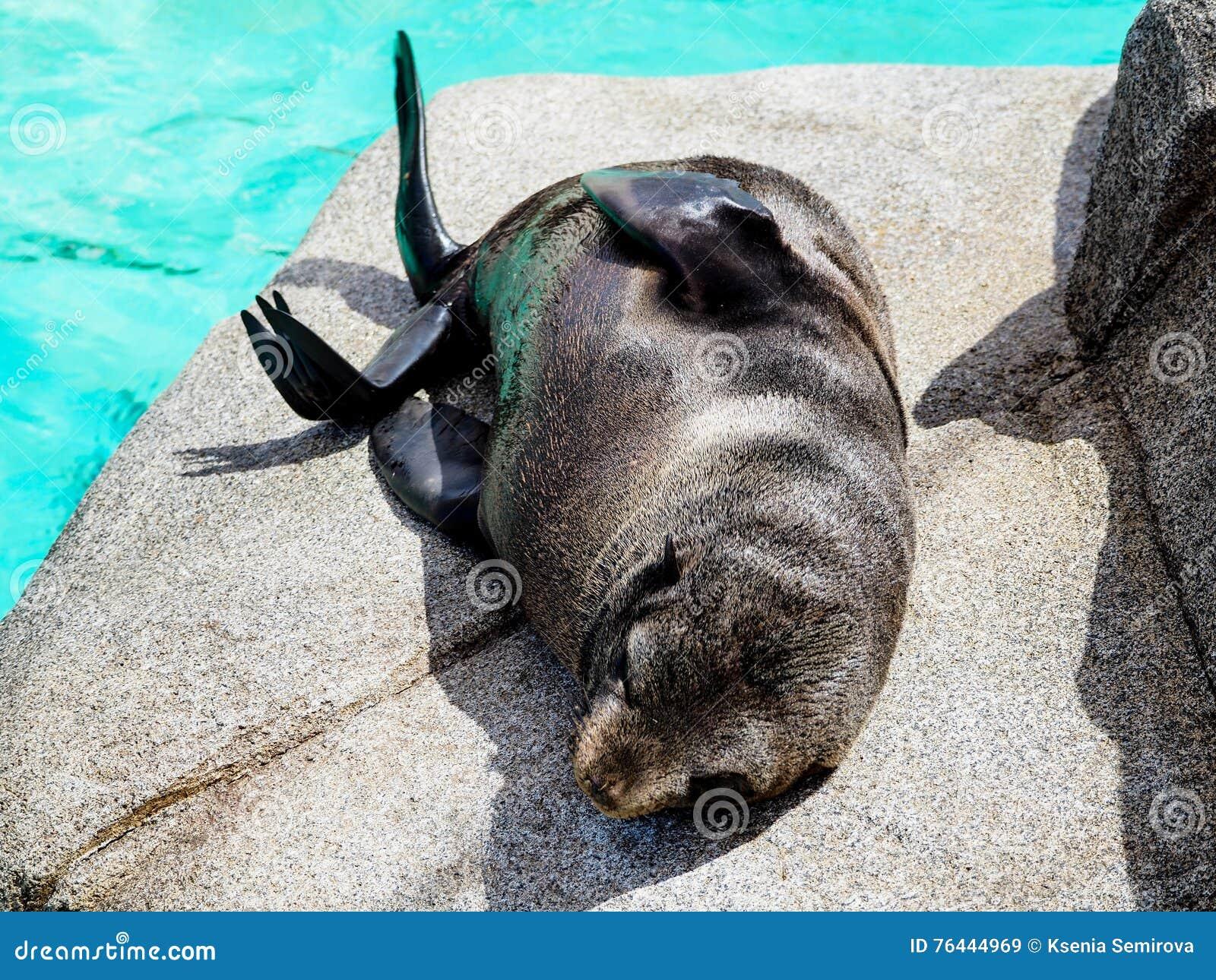 Closeup of a Baby sea lion