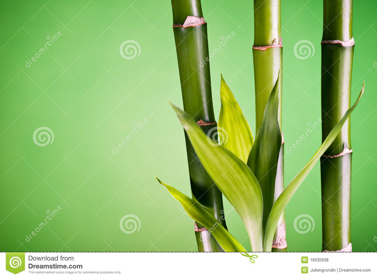 Closeup of bamboo and leaves