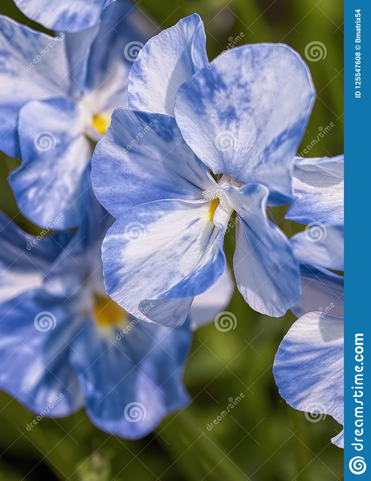 A Bouquet Of Blue Flowers Stock Photo Image Of Bright 125547608