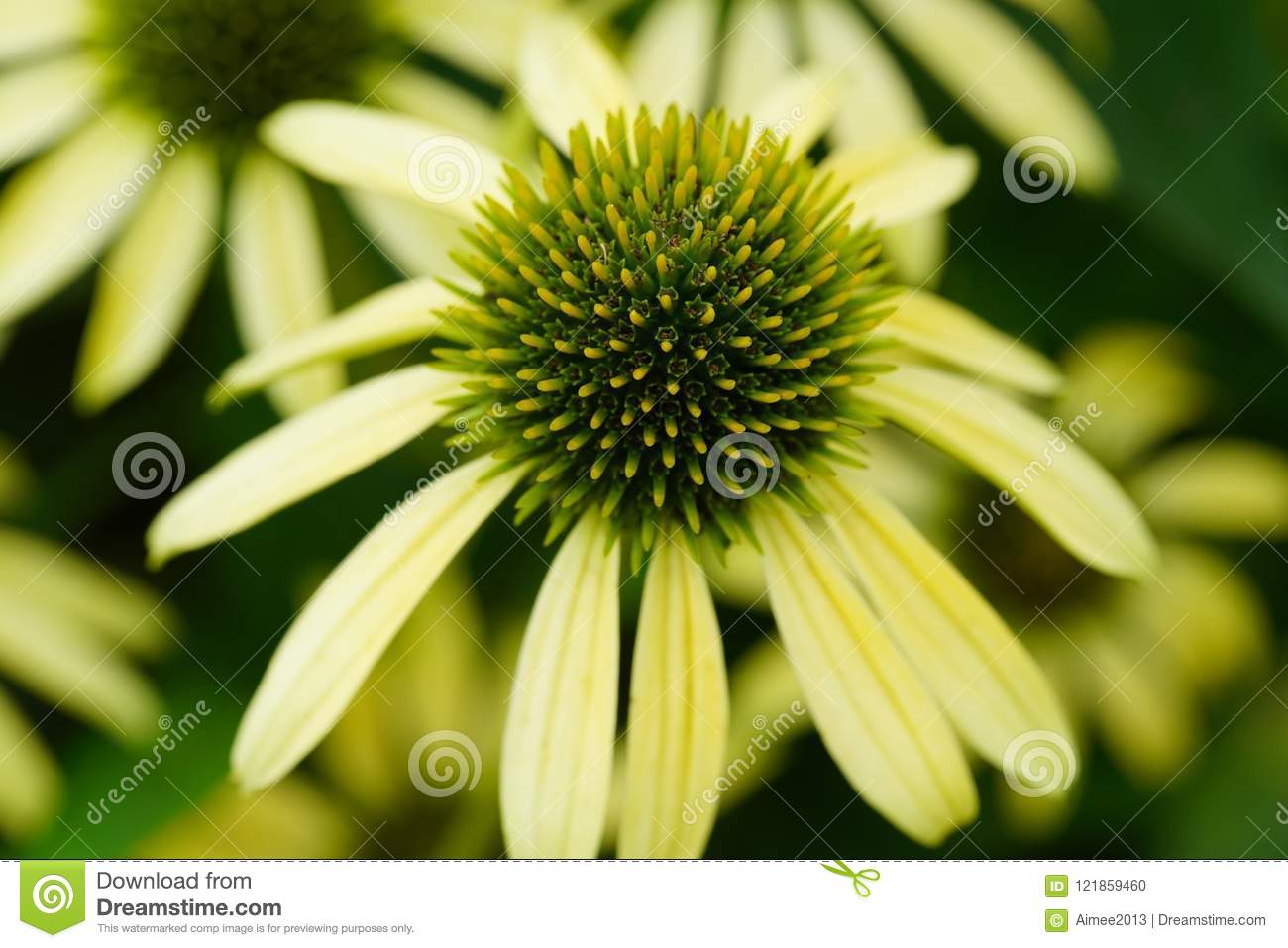 beautiful flowers closeup in summer time