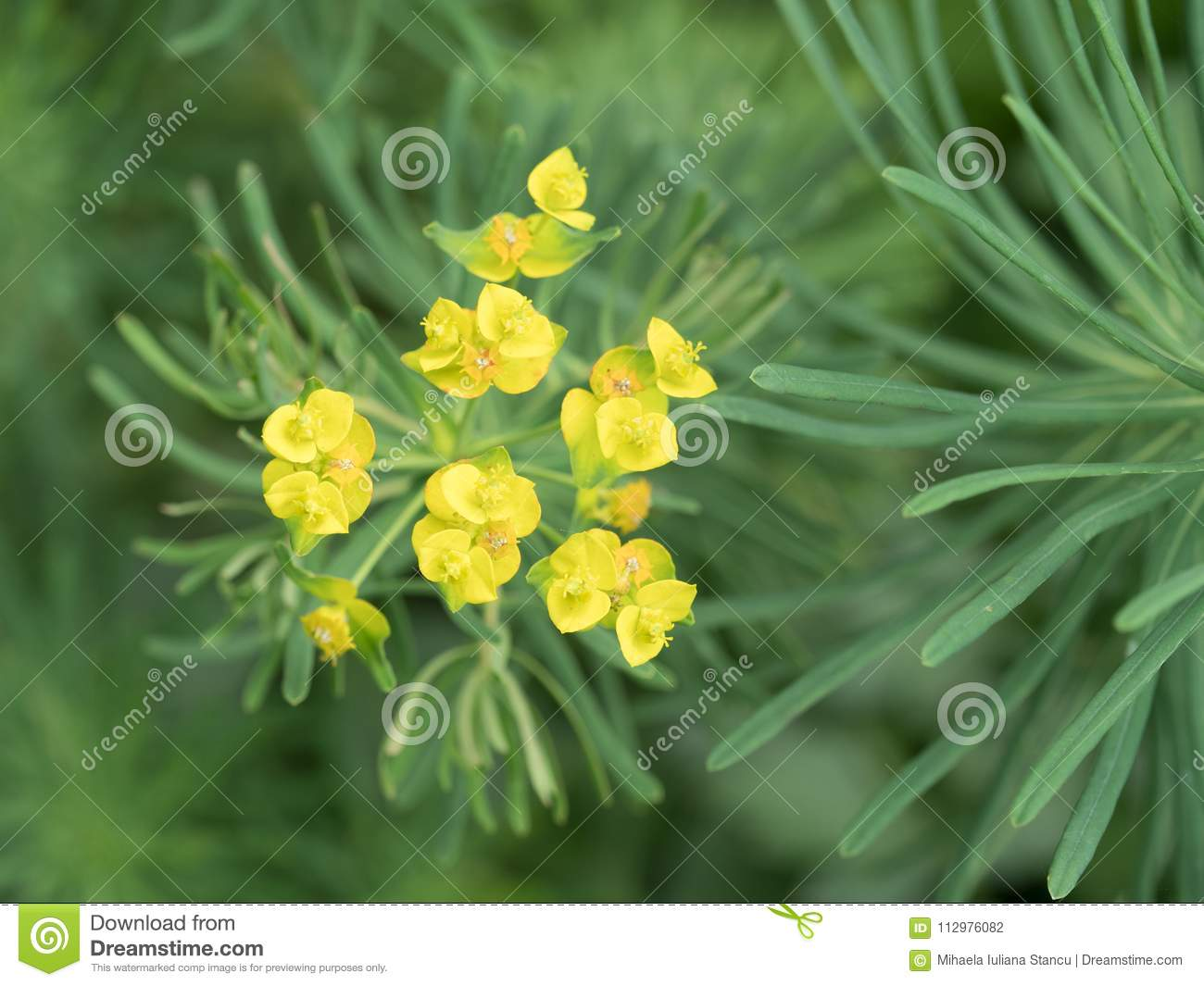 Closeup of a beautiful yellow wild flower