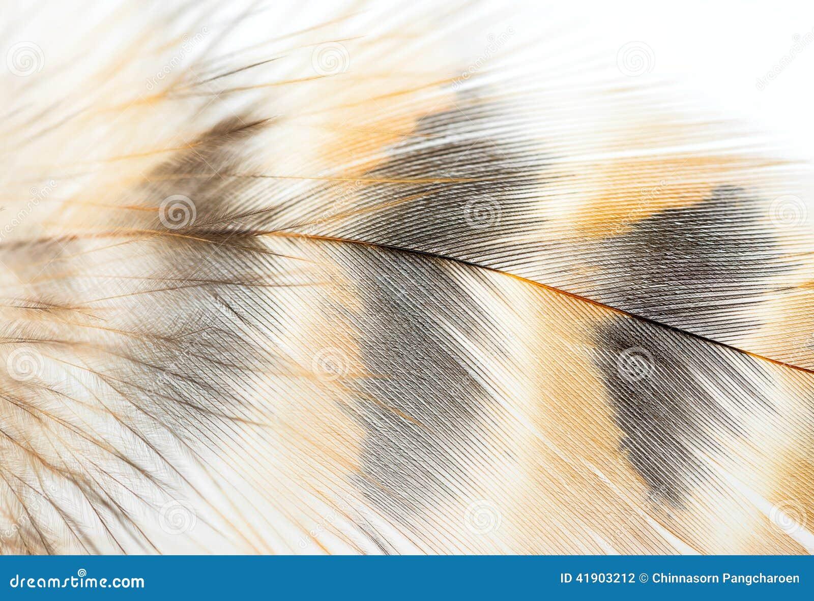 Closeup Of Bird Feather Stock Photo - Image: 41903212