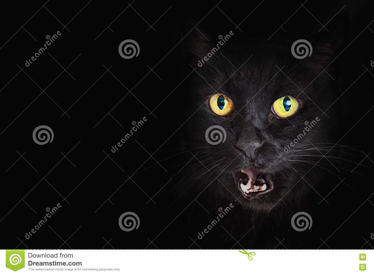 Closeup black cat mouth open stock photo image of kitty - Scary yellow eyes ...