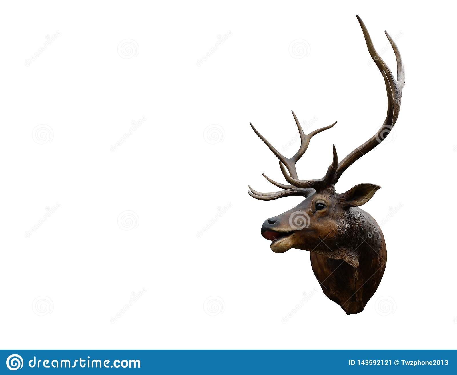 Closeup brown deer on white background,object, copy space