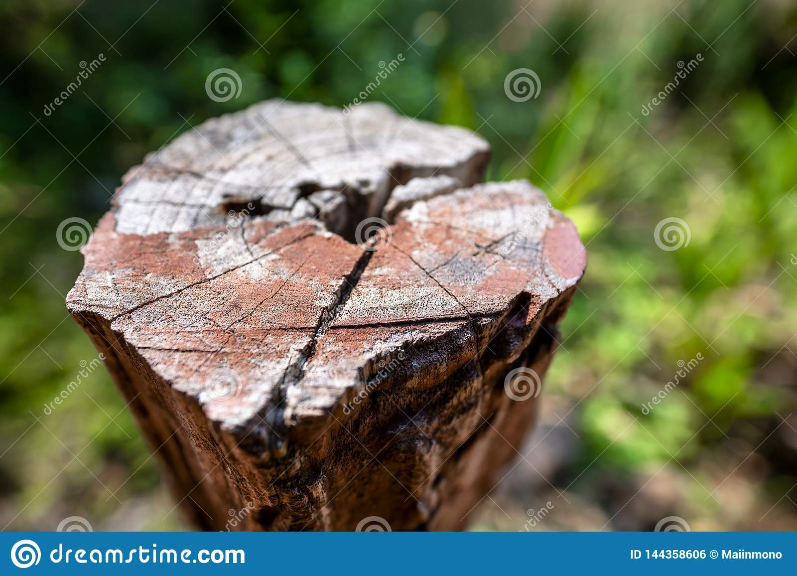 Closeup of brown tree stump with blurred green background.