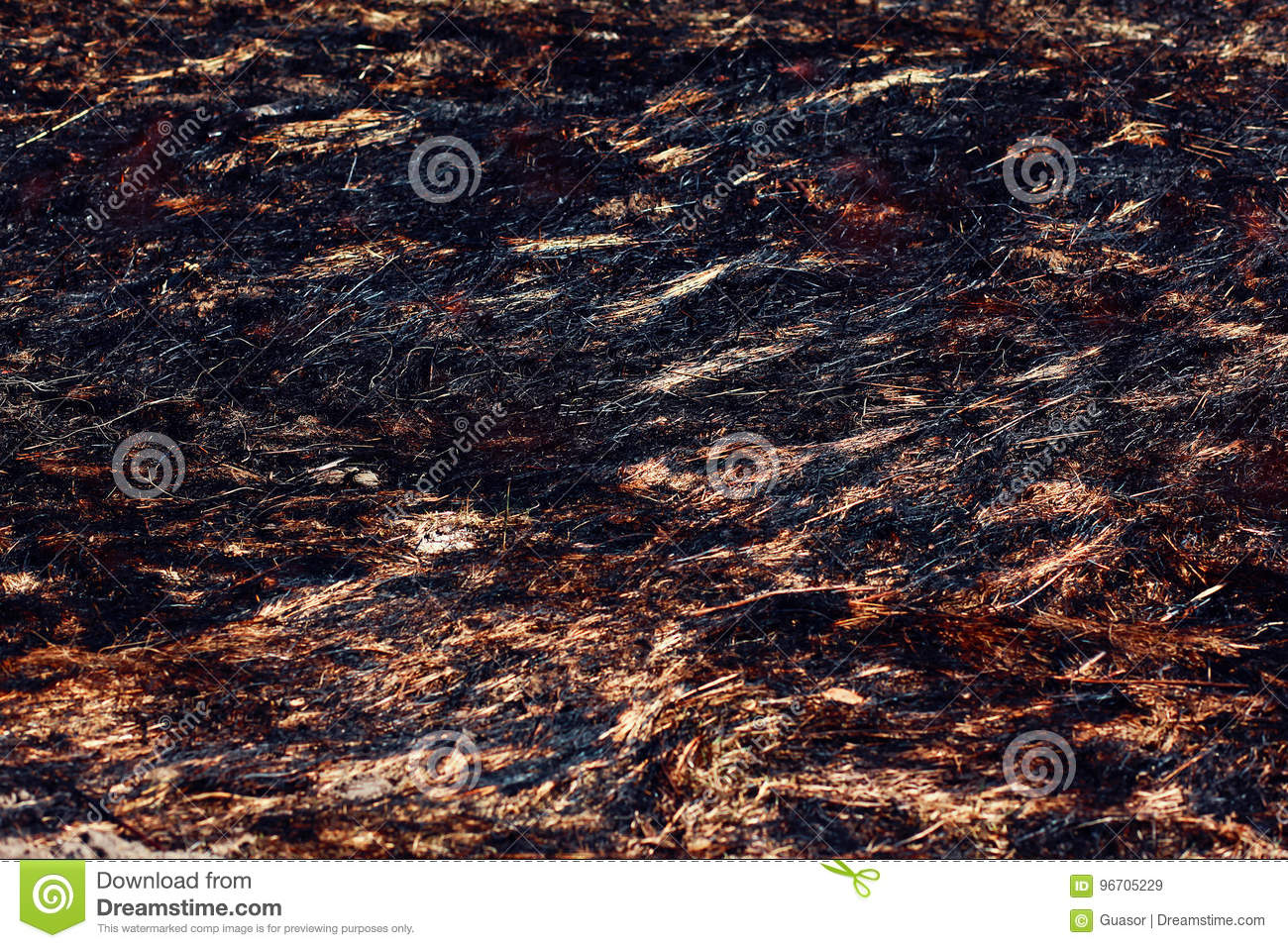 dry grass field background. Closeup Burned Dry Grass Field Background