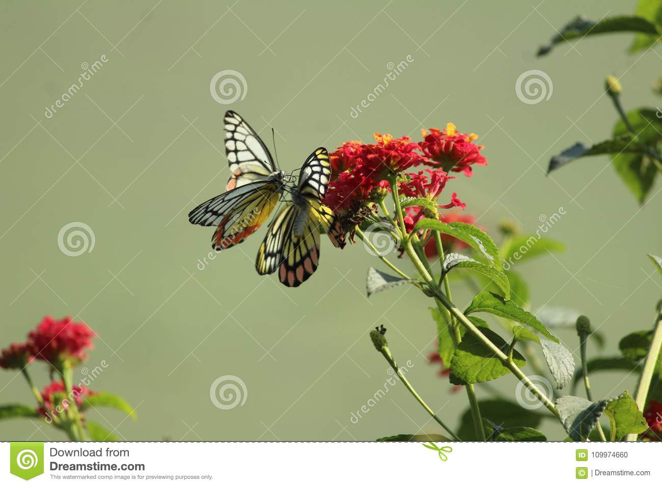 Closeup Butterfly On Flower Wallpaper Stock Photo Image Of