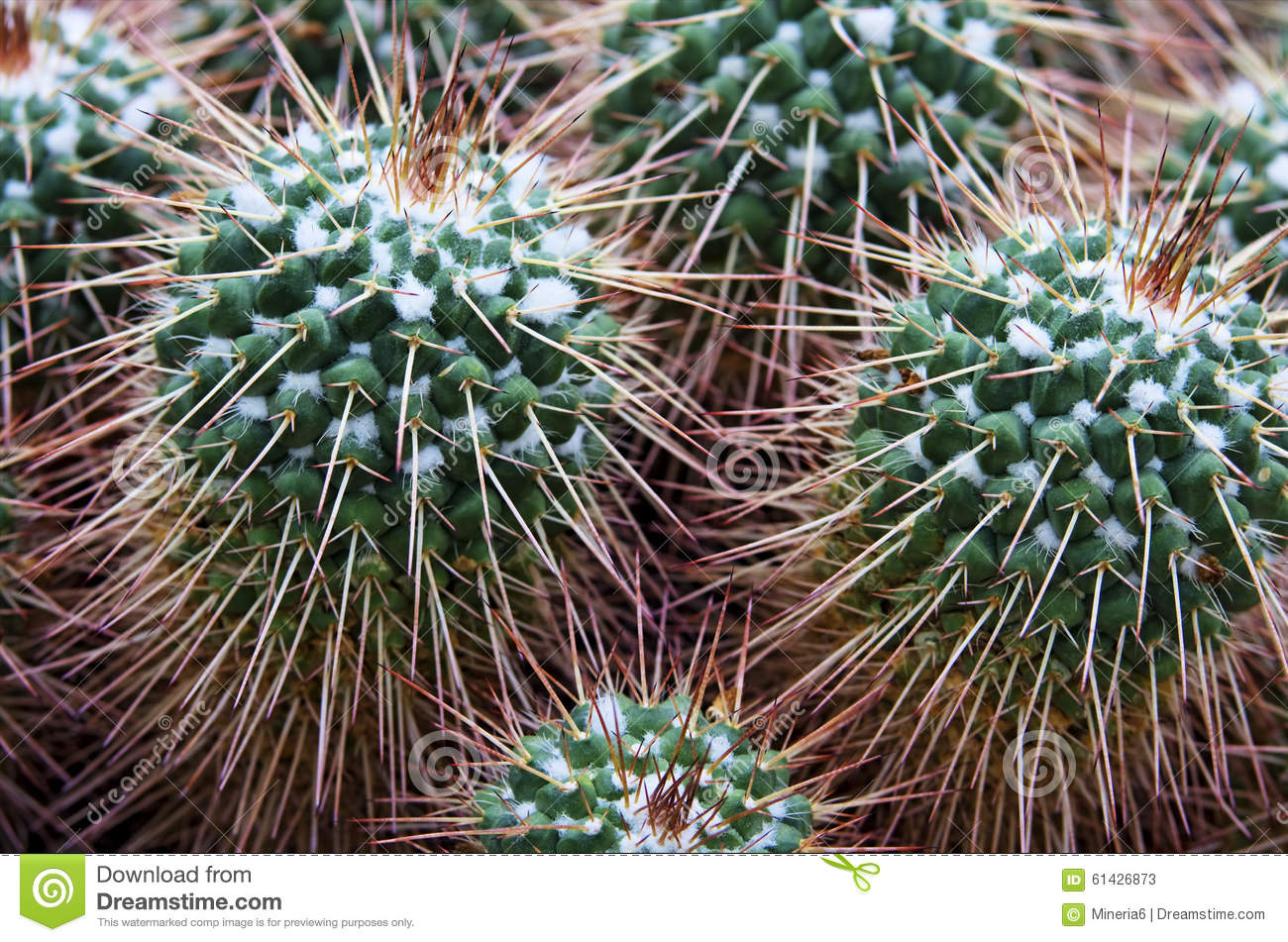 Closeup of a cactus plant stock photo image 61426873 for What time does the botanical gardens close