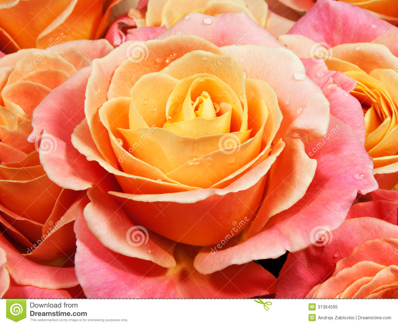 closeup colorful roses pink yellow orange royalty free stock photo image 31364595. Black Bedroom Furniture Sets. Home Design Ideas