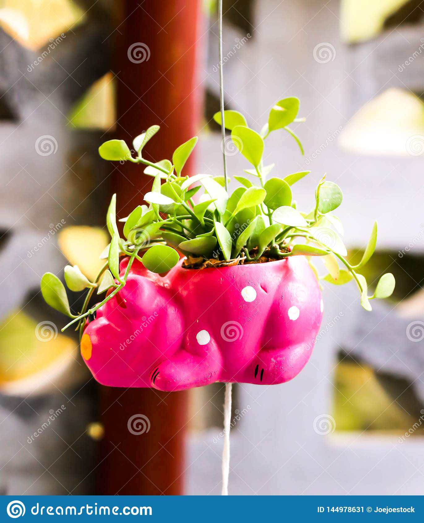 Closeup of cute pink flowerpot with green leaves
