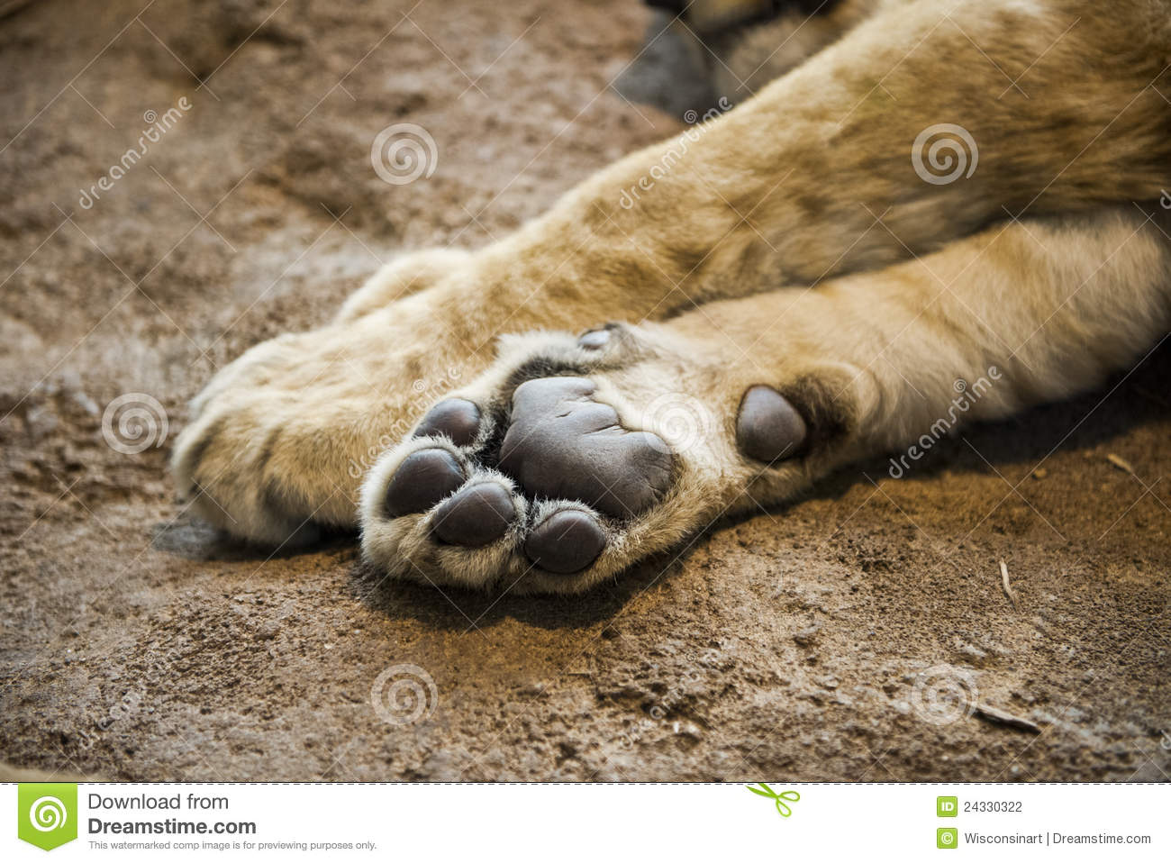 under the lions paw