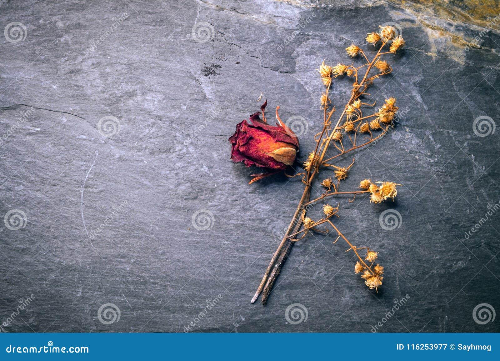 Dry Rose Flower on Stone