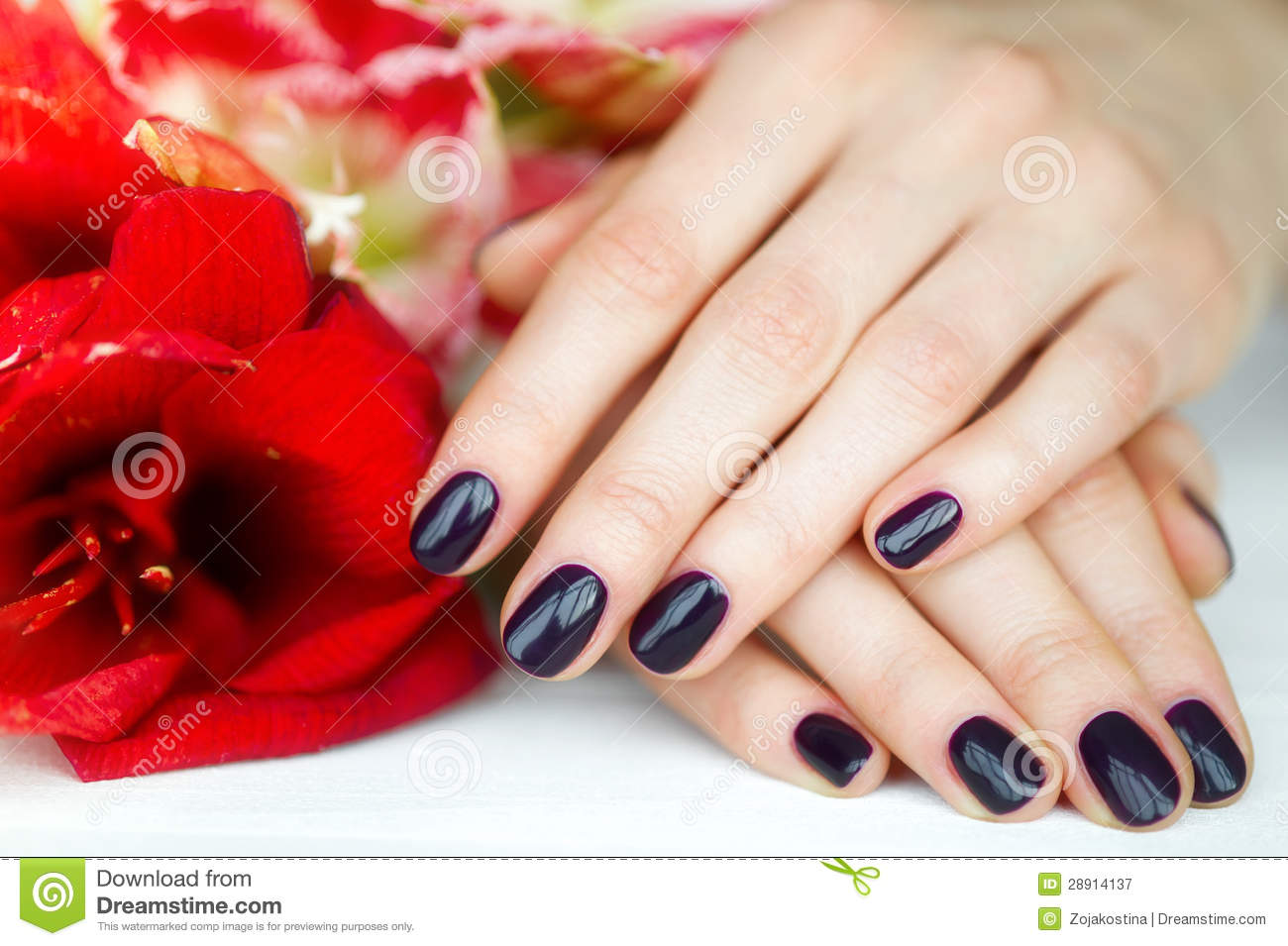 Closeup Fingernails With Dark Manicure And Red Flowers Stock Image ...