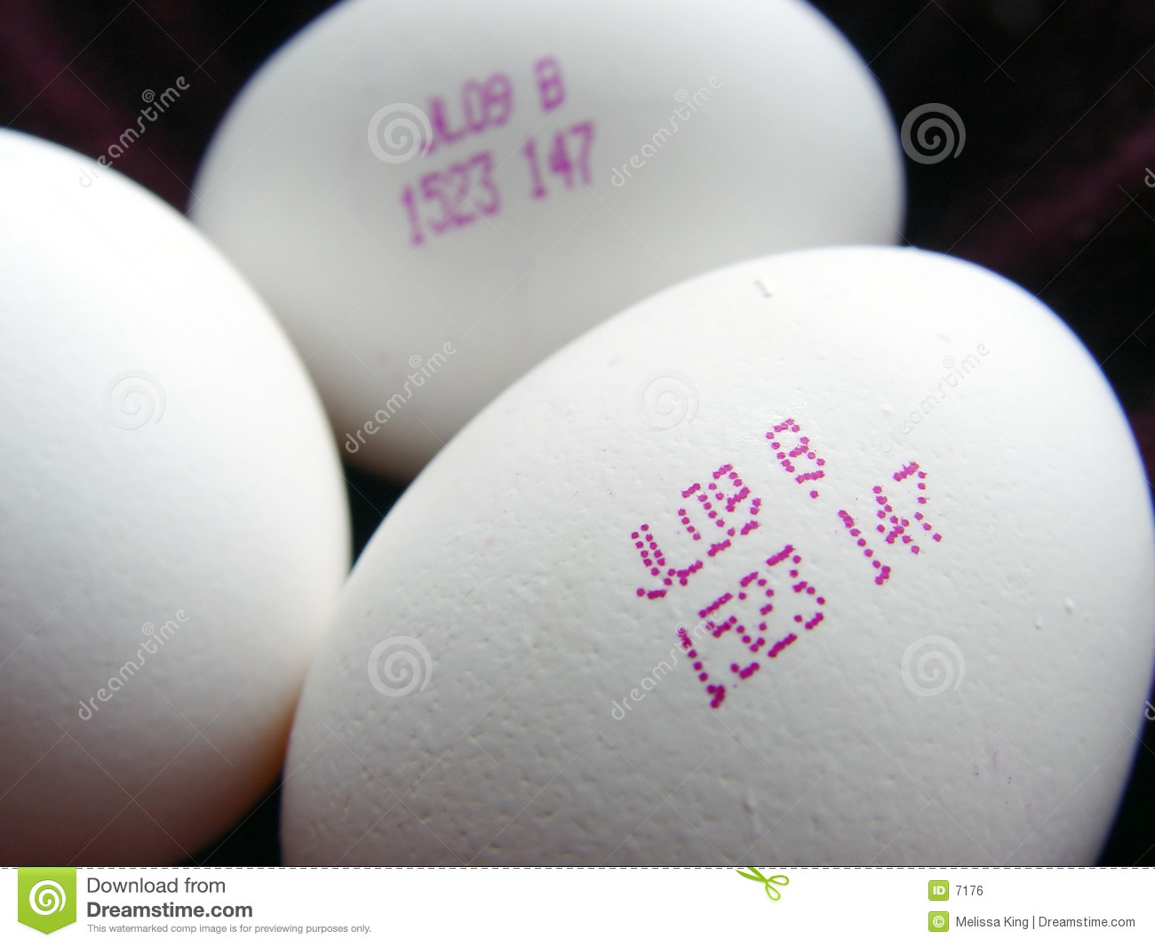 Closeup of Future Eggs