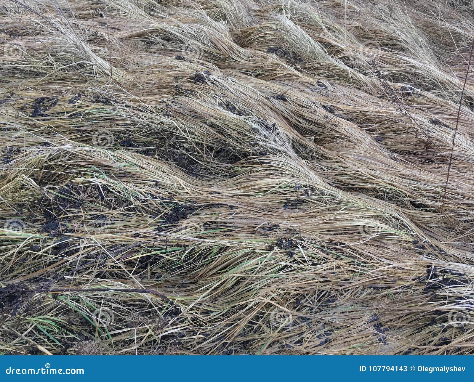 Grass field closeup