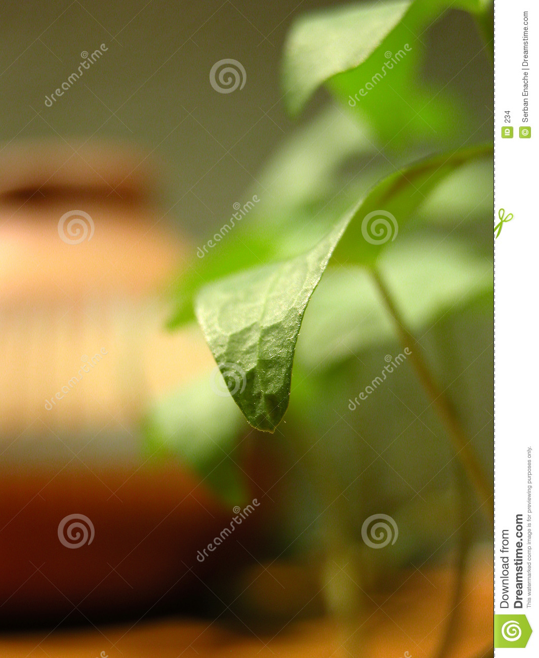 Closeup of a green leaf