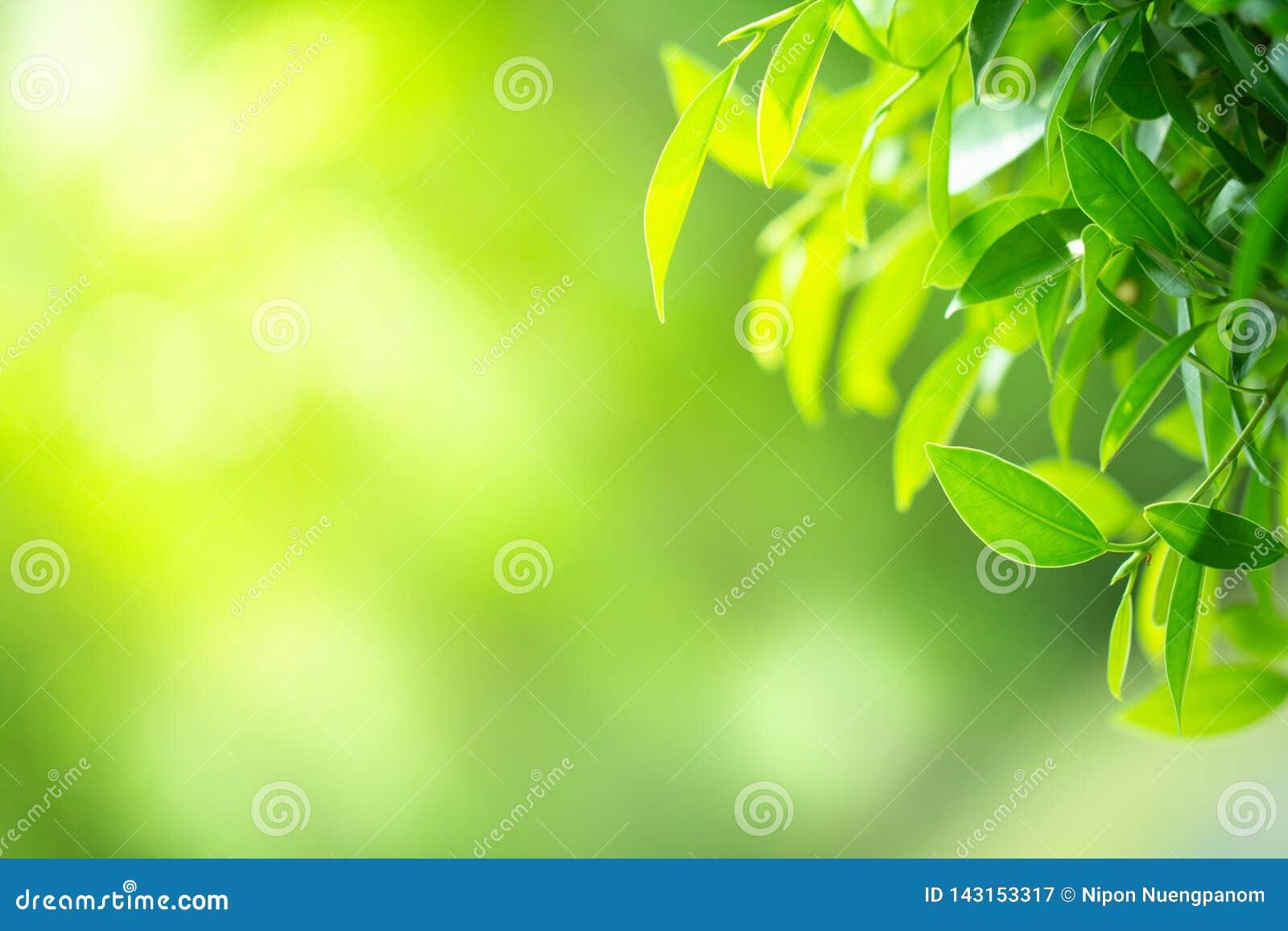 Closeup green leaf on blurred bokeh background