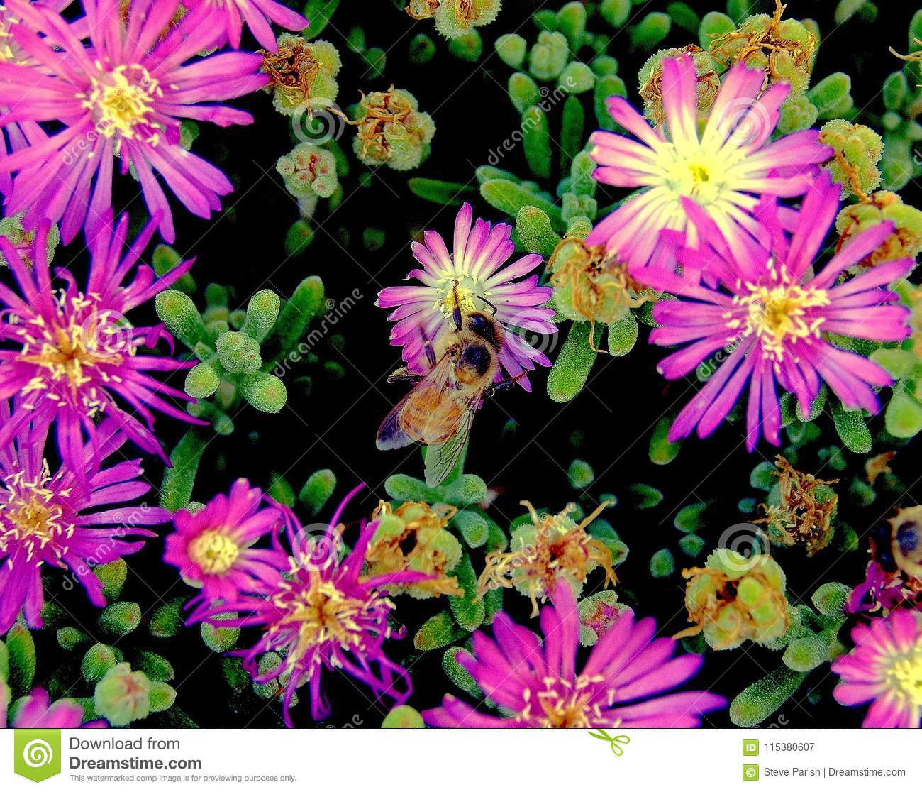 Closeup of honey bee in floral color explosion