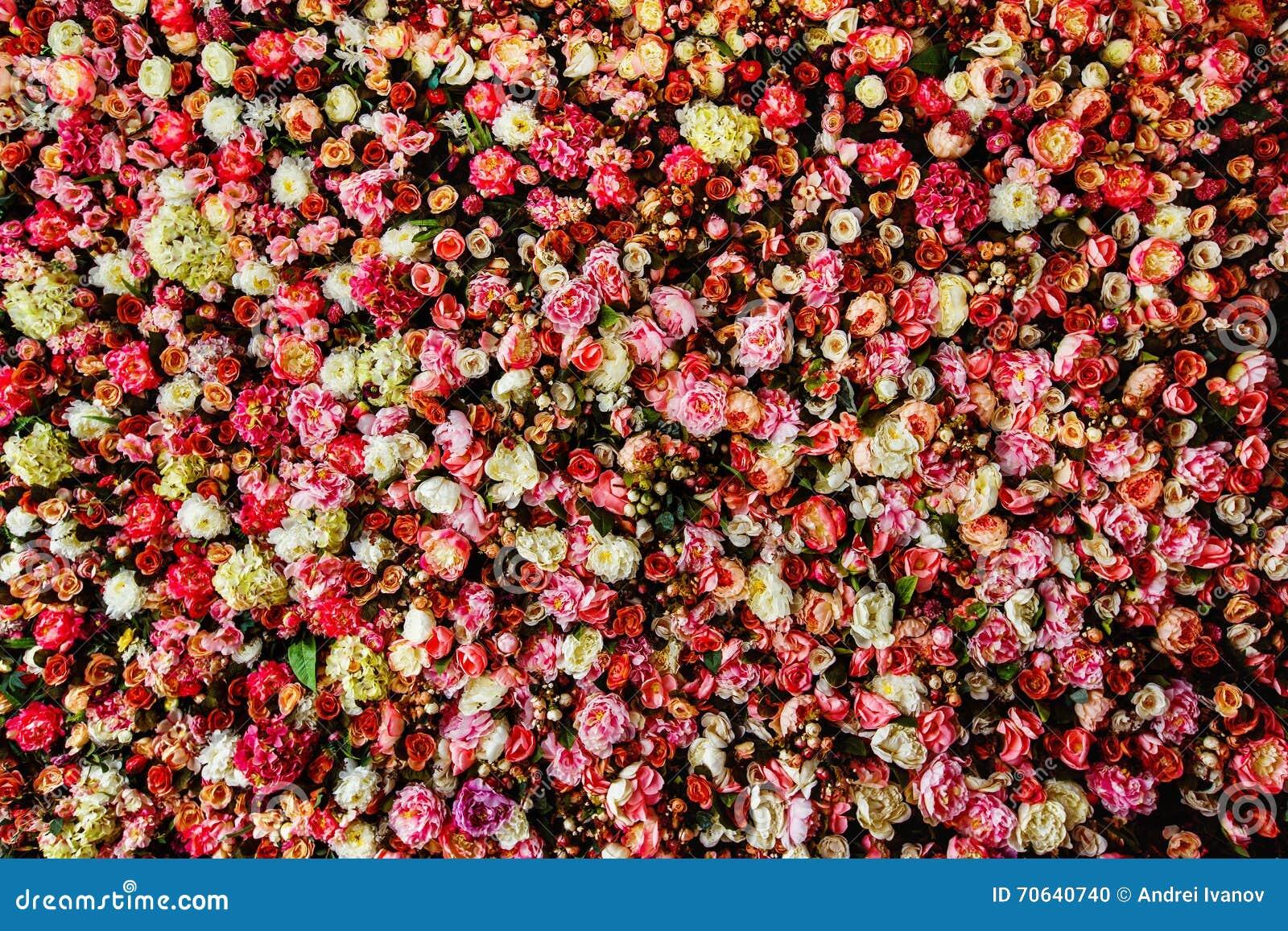 Closeup image of beautiful flowers wall background stock photo closeup image of beautiful flowers wall background izmirmasajfo