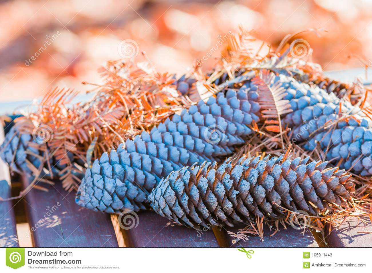 Closeup Of Large Pine Cones On Wooden Picnic Table Stock Image - Spruce picnic table