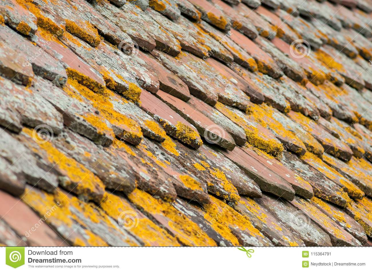 Lichen On Terra Cotta Tiles On Roof Stock Image - Image of roof