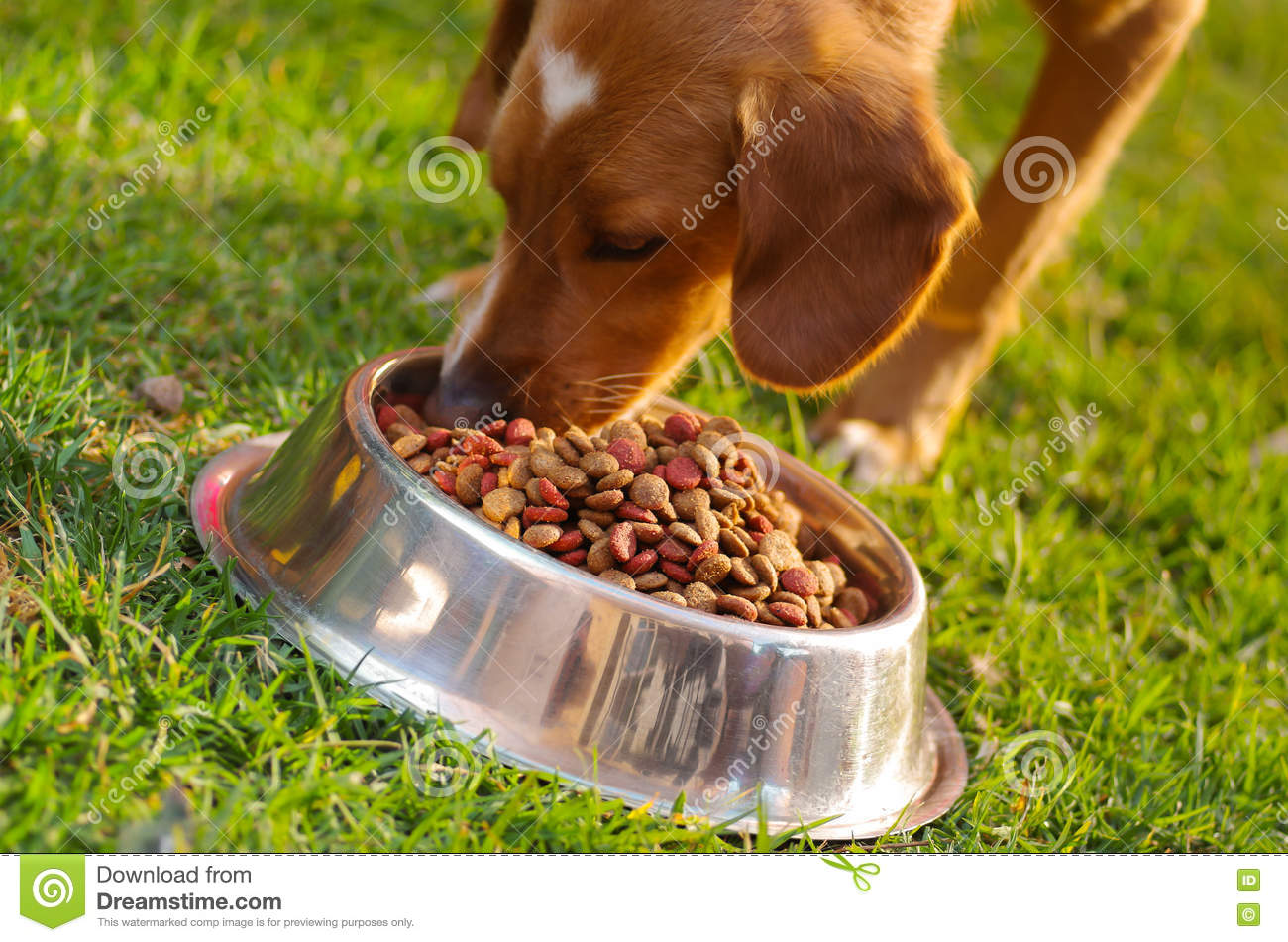 Home Made Small Breed Dog Food