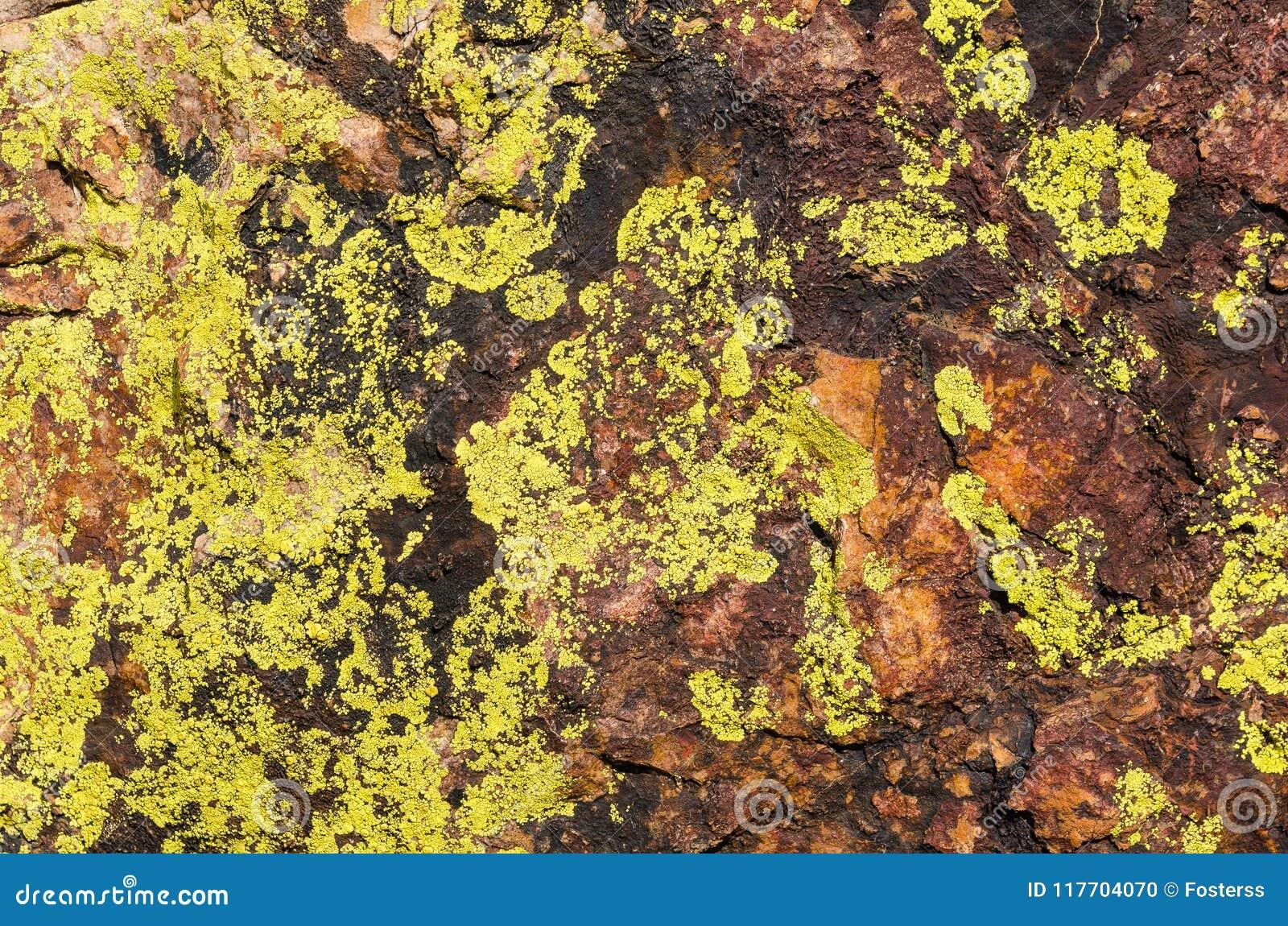 Closeup moss rock texture.