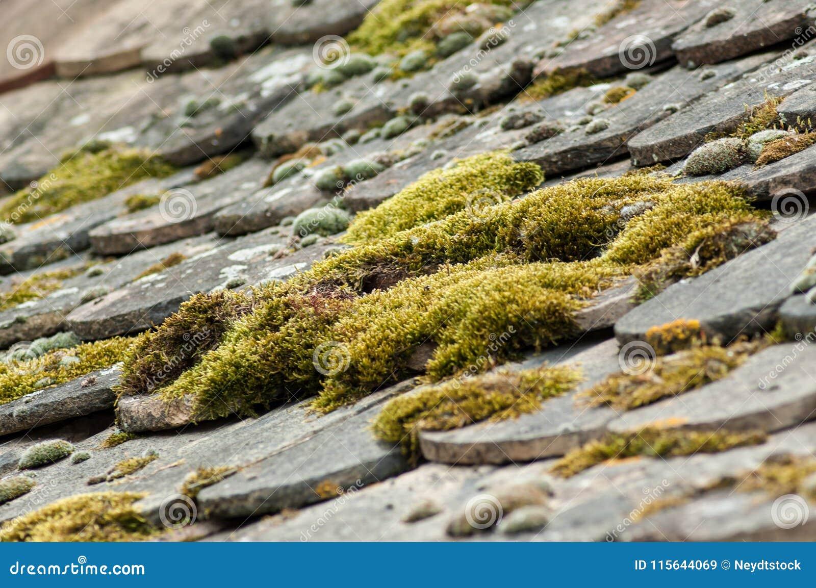 Moss On Terra Cotta Tiles On Roof Stock Image - Image of ceramic