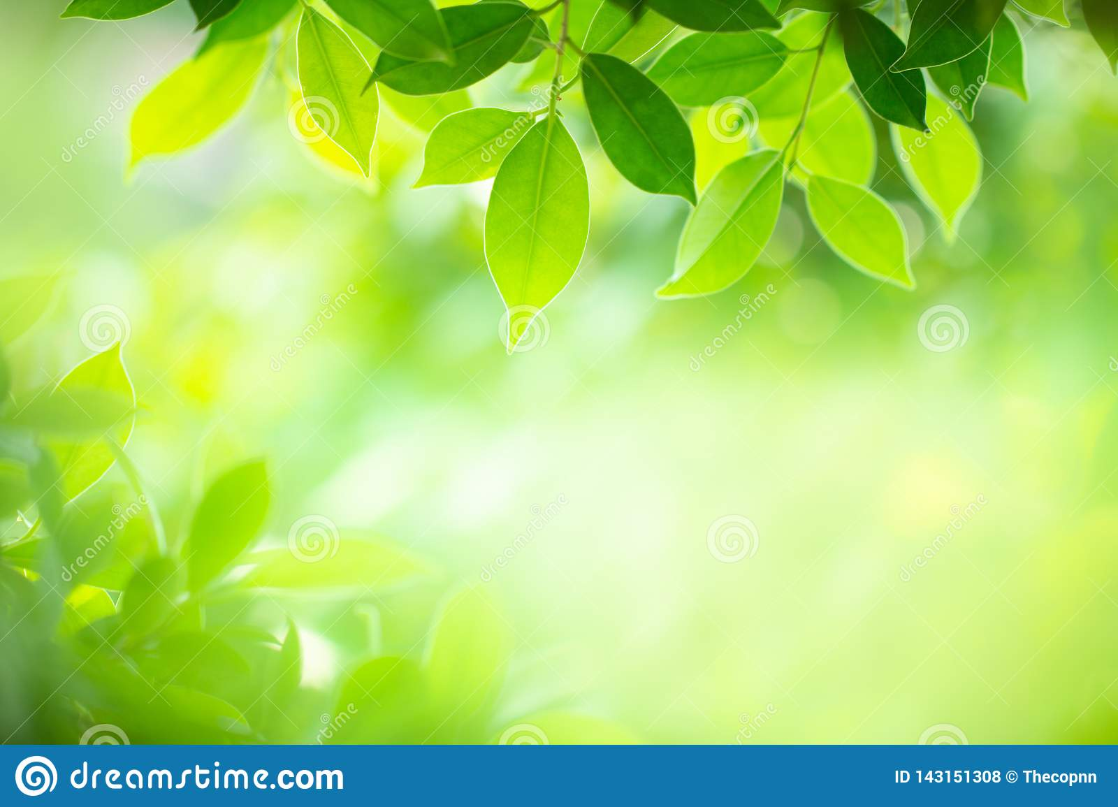 Closeup Nature View Of Green Leaf On Blurred Background In Selective Focus  Stock Photo - Image Of Bright, Botany: 143151308