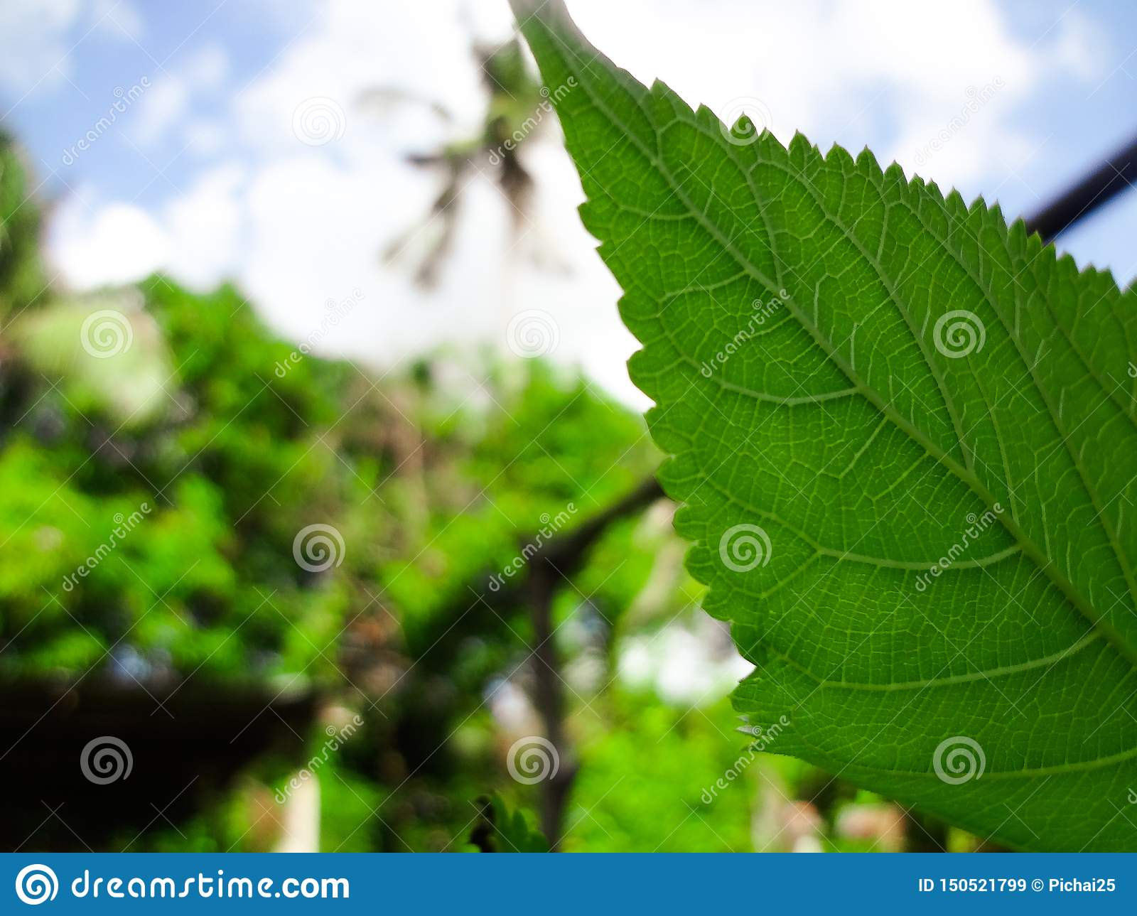 Closeup nature view of green leaf on blurred greenery background in garden with copy space using as background natural green
