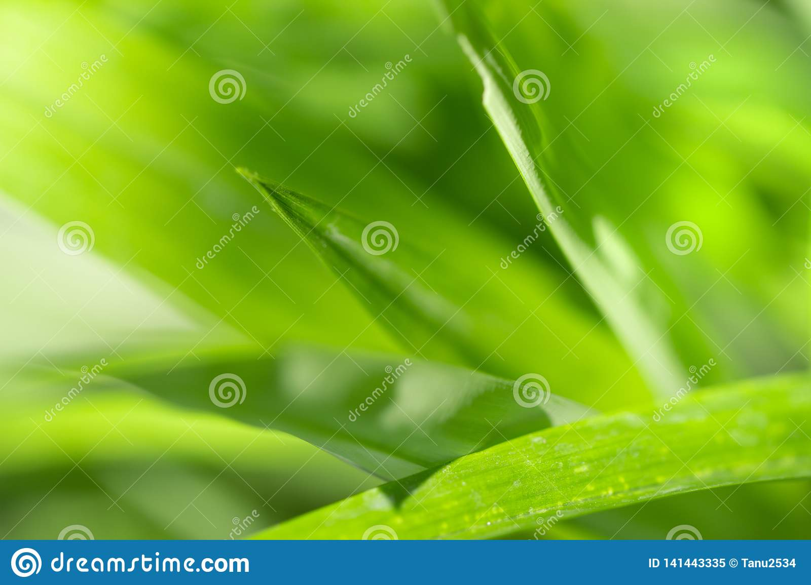 Close Up nature view of green leaf and green natural background