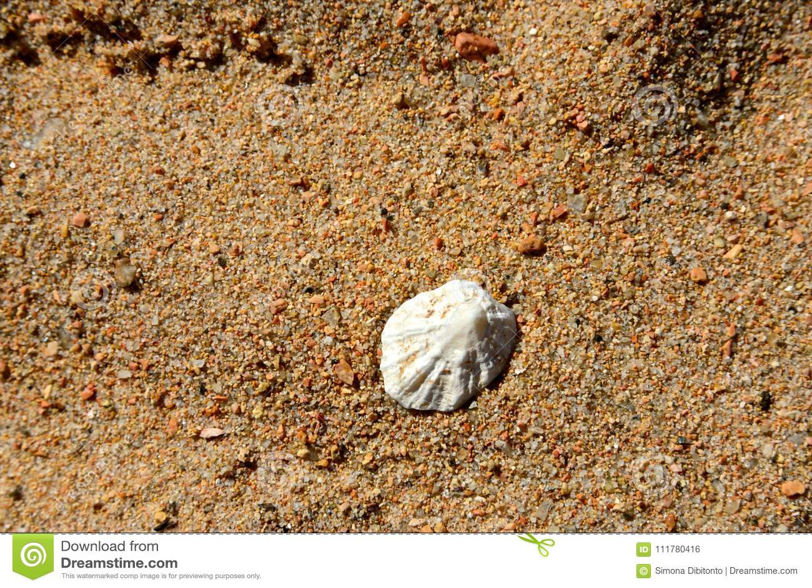 Closeup of one white shell