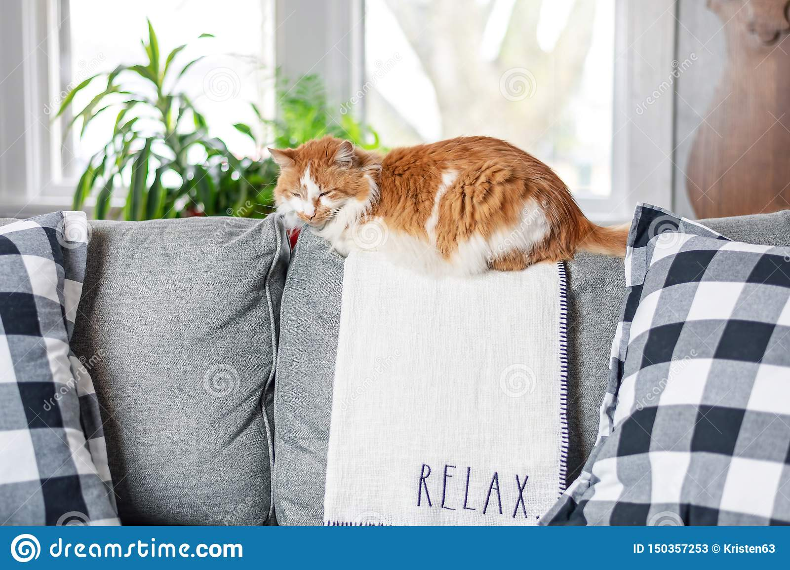 Tremendous Closeup Of Orange Kitty Laying On The Couch On A Blanket Dailytribune Chair Design For Home Dailytribuneorg