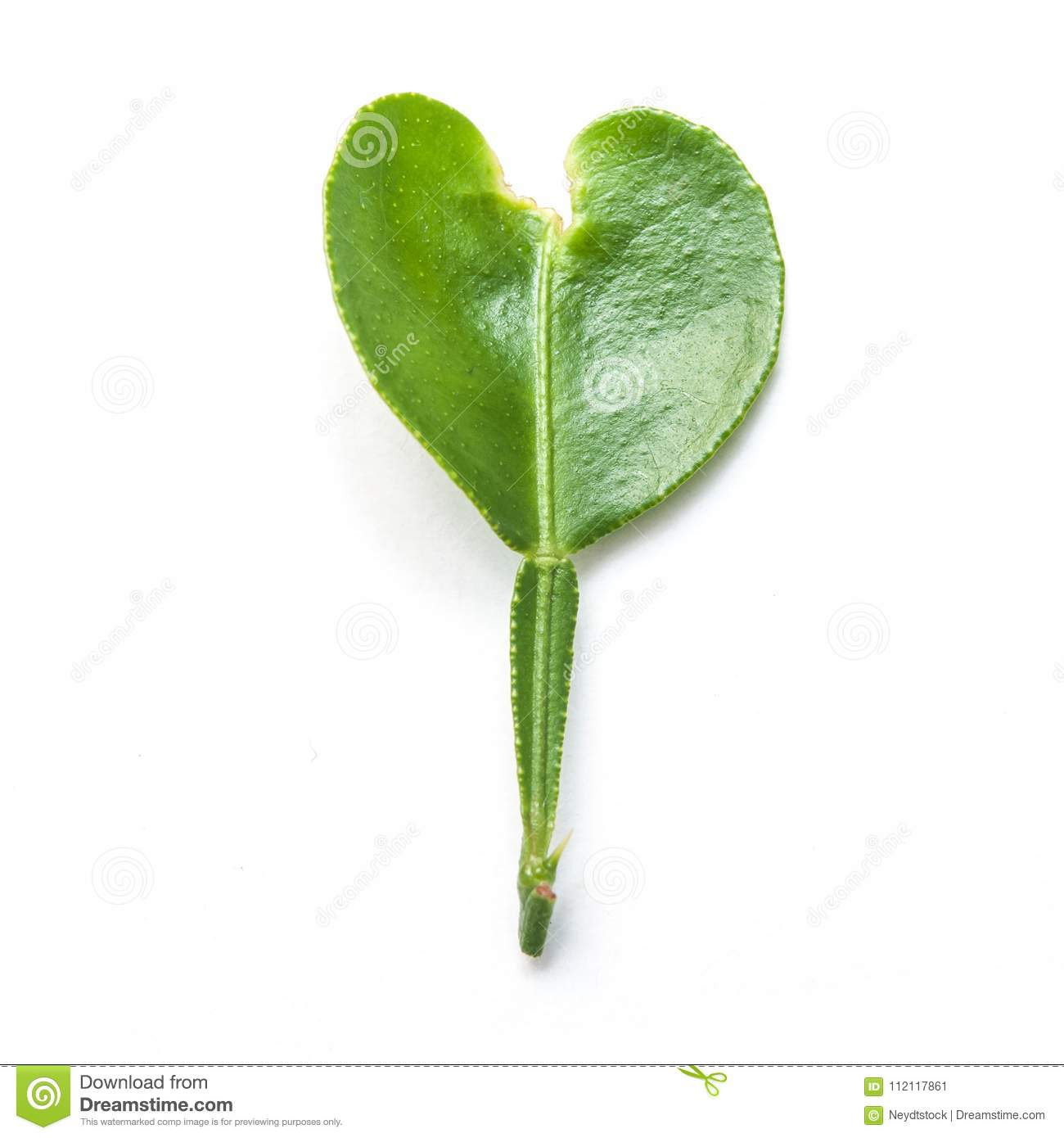 Orange Tree Leaf In Shaped Heart On White Background Stock Image