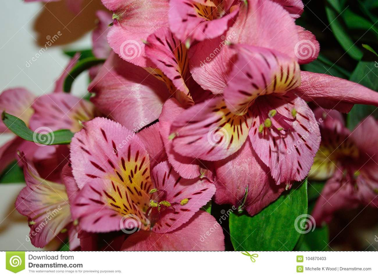 Two Pink Day Lily Blossoms