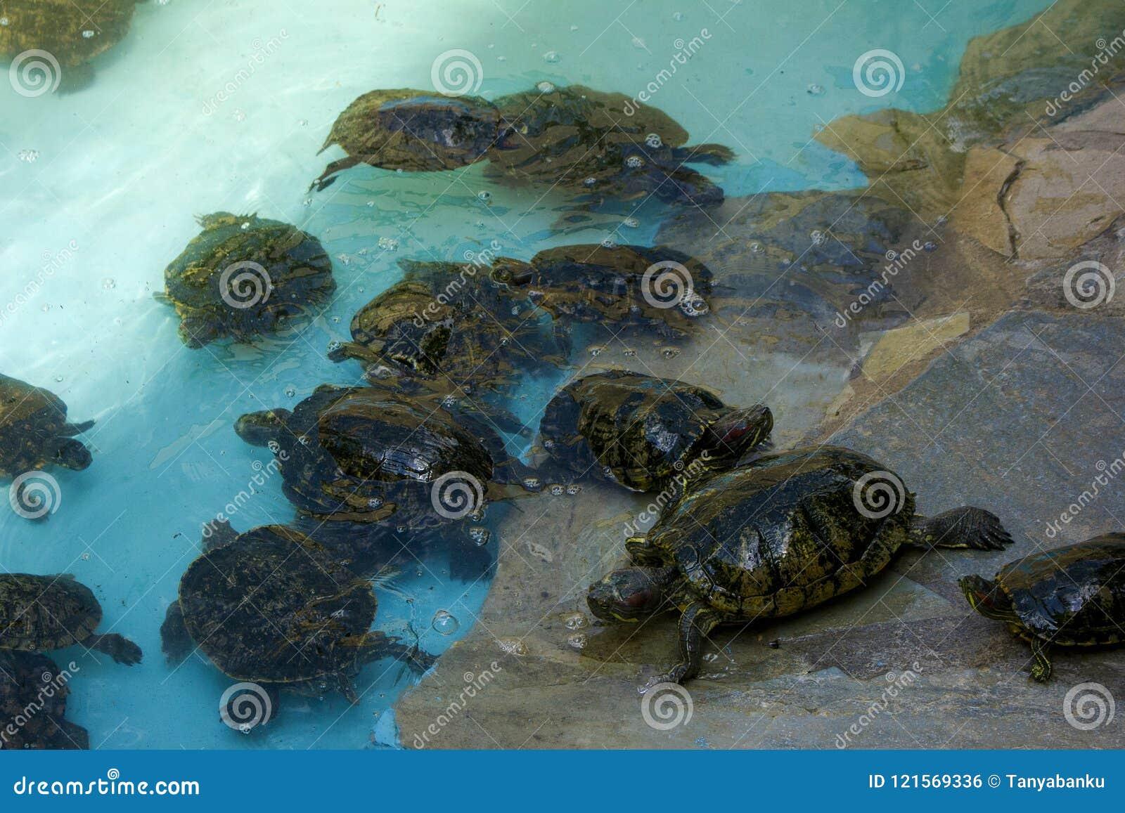Closeup photo of small turtles