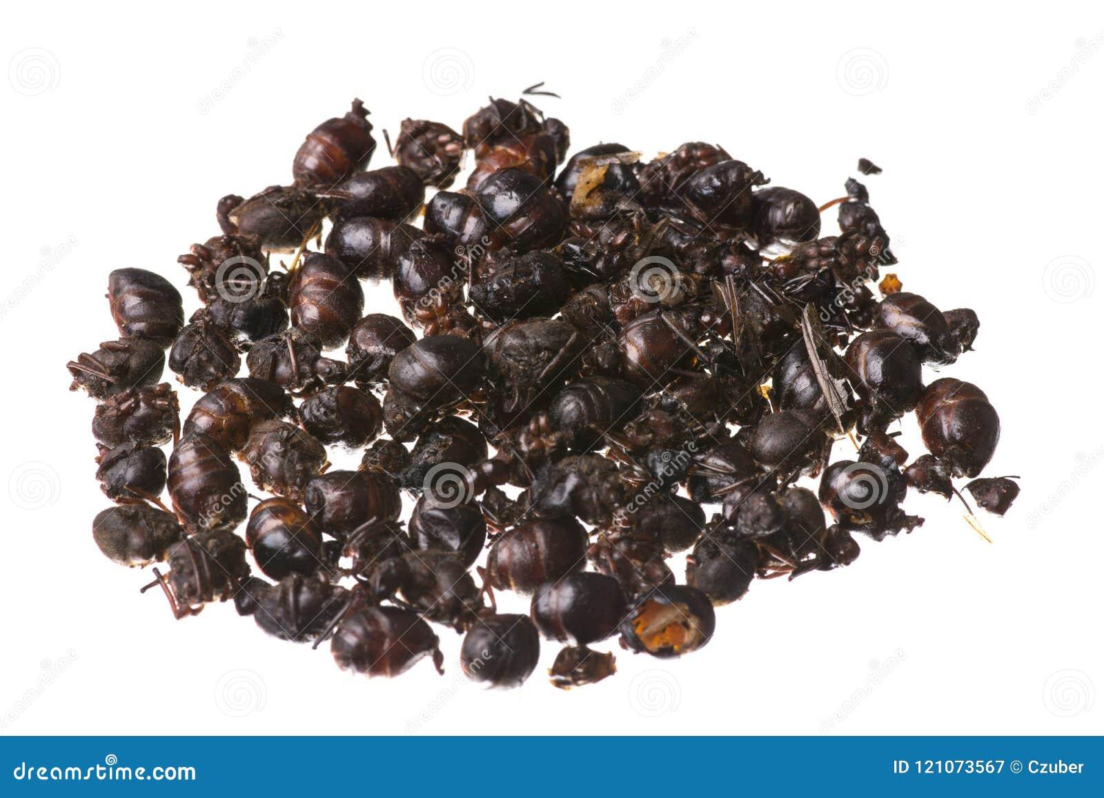 Edible Roasted Flying Ants Isolated On White Background Stock Image