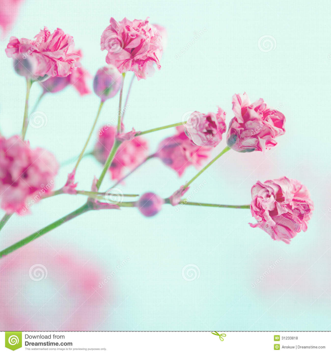 how to draw babys breath flower