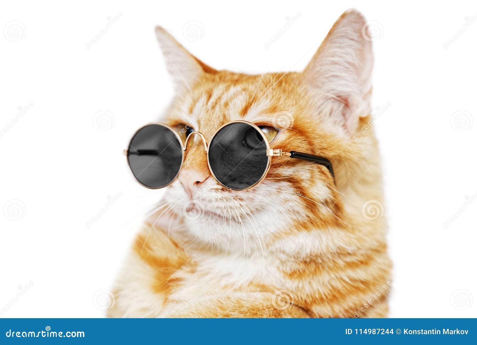 Closeup portrait of funny ginger cat wearing sunglasses