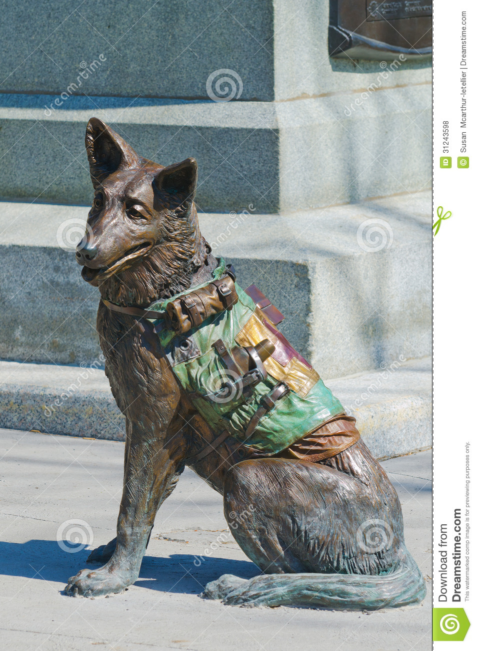 closeup  red cross soldier dog editorial stock photo image