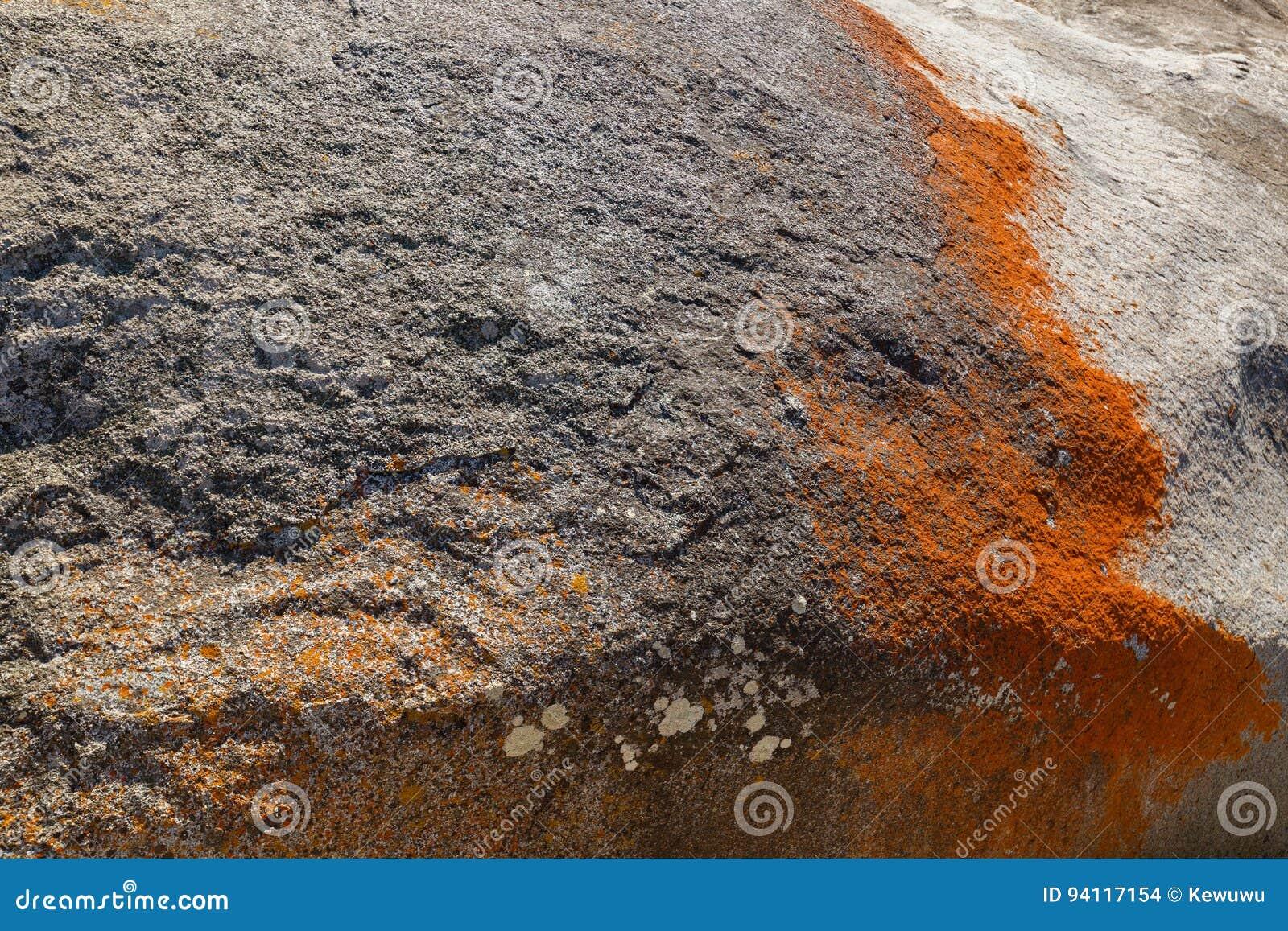 Closeup of red orange lichen growing on granite rocks formations