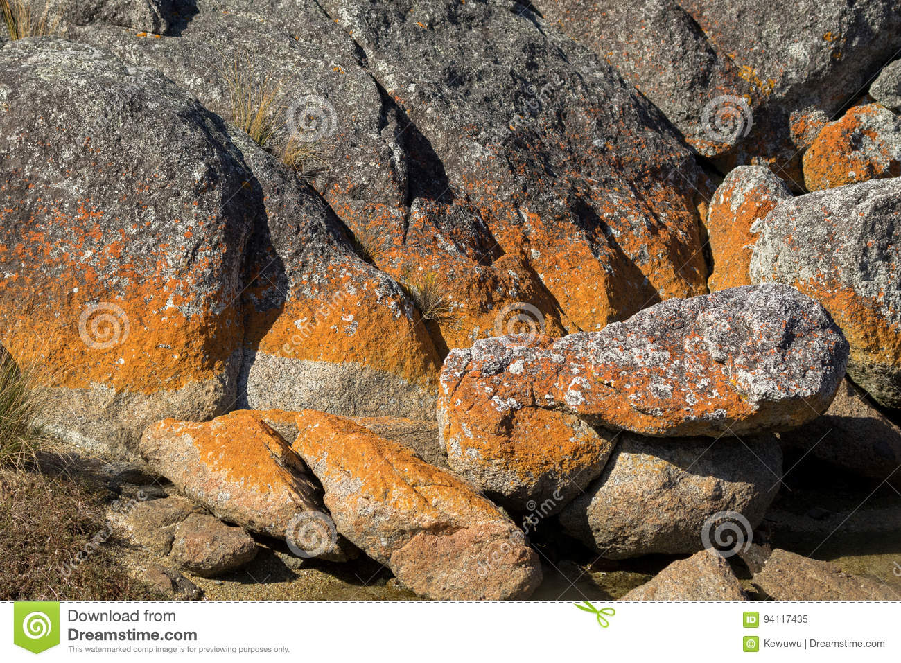Closeup of red orange lichen growing on granite rocks formations