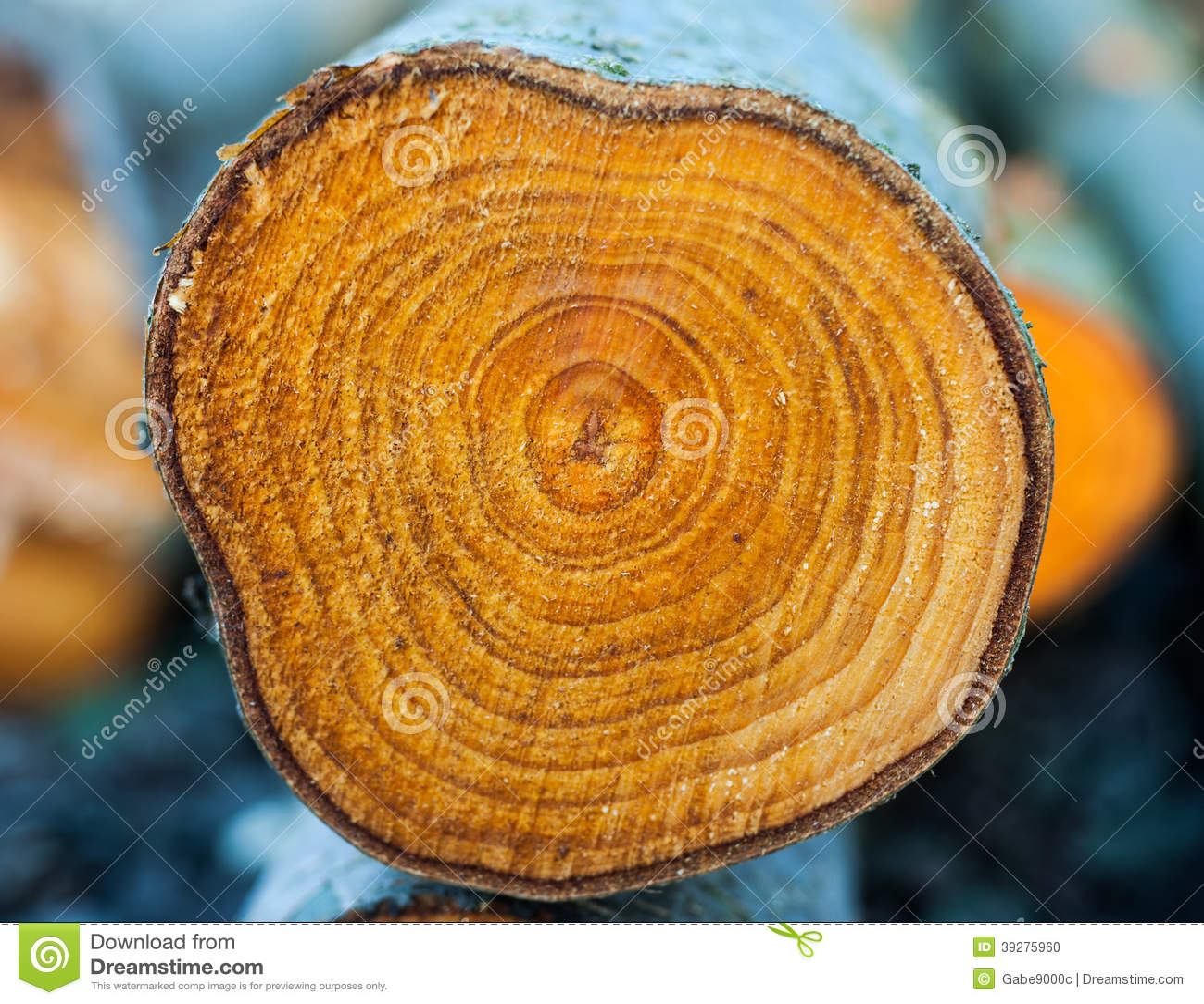 Closeup rings of chopped tree trunk