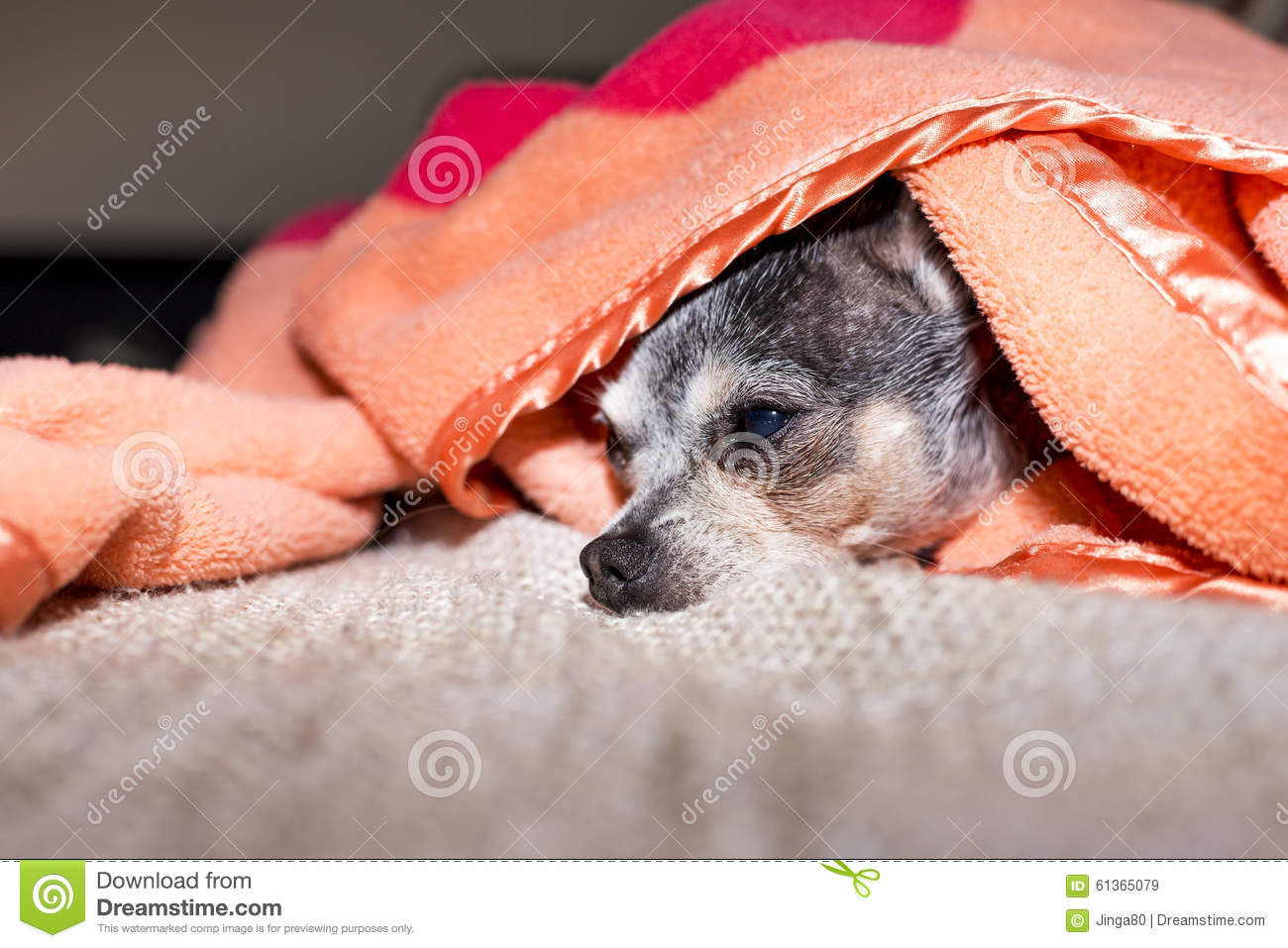 Funny Picture Of Dog Wrapped Up In Blanket