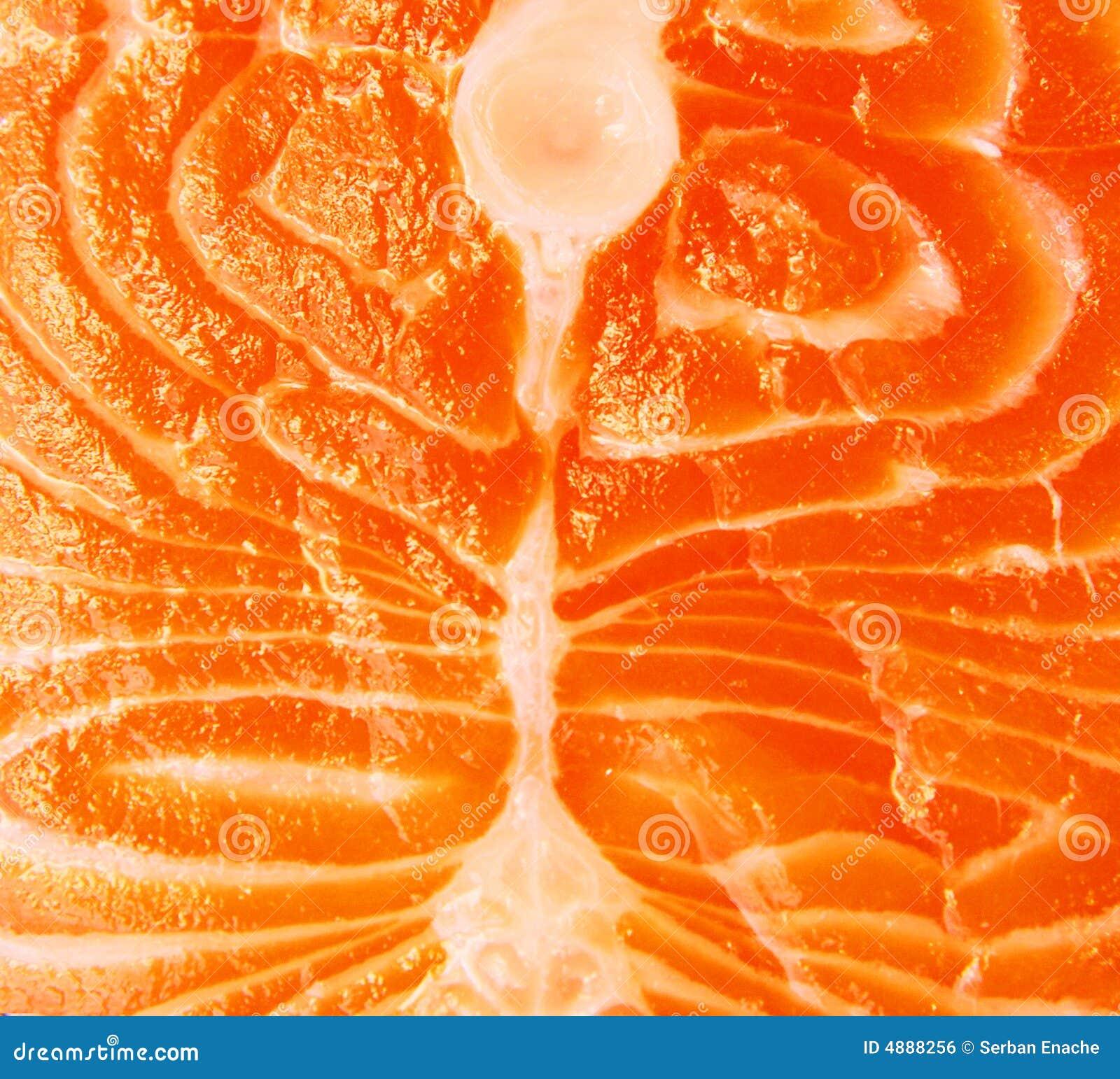 Closeup of salmon meat