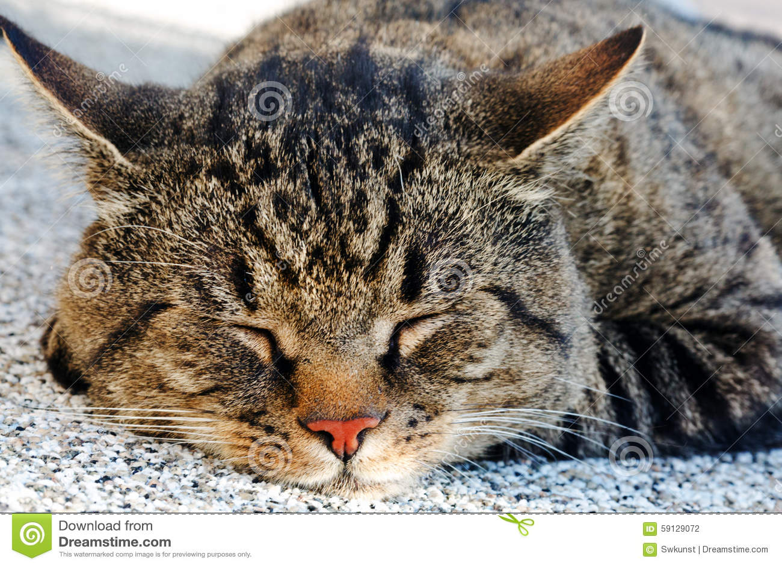 sleeping closeup