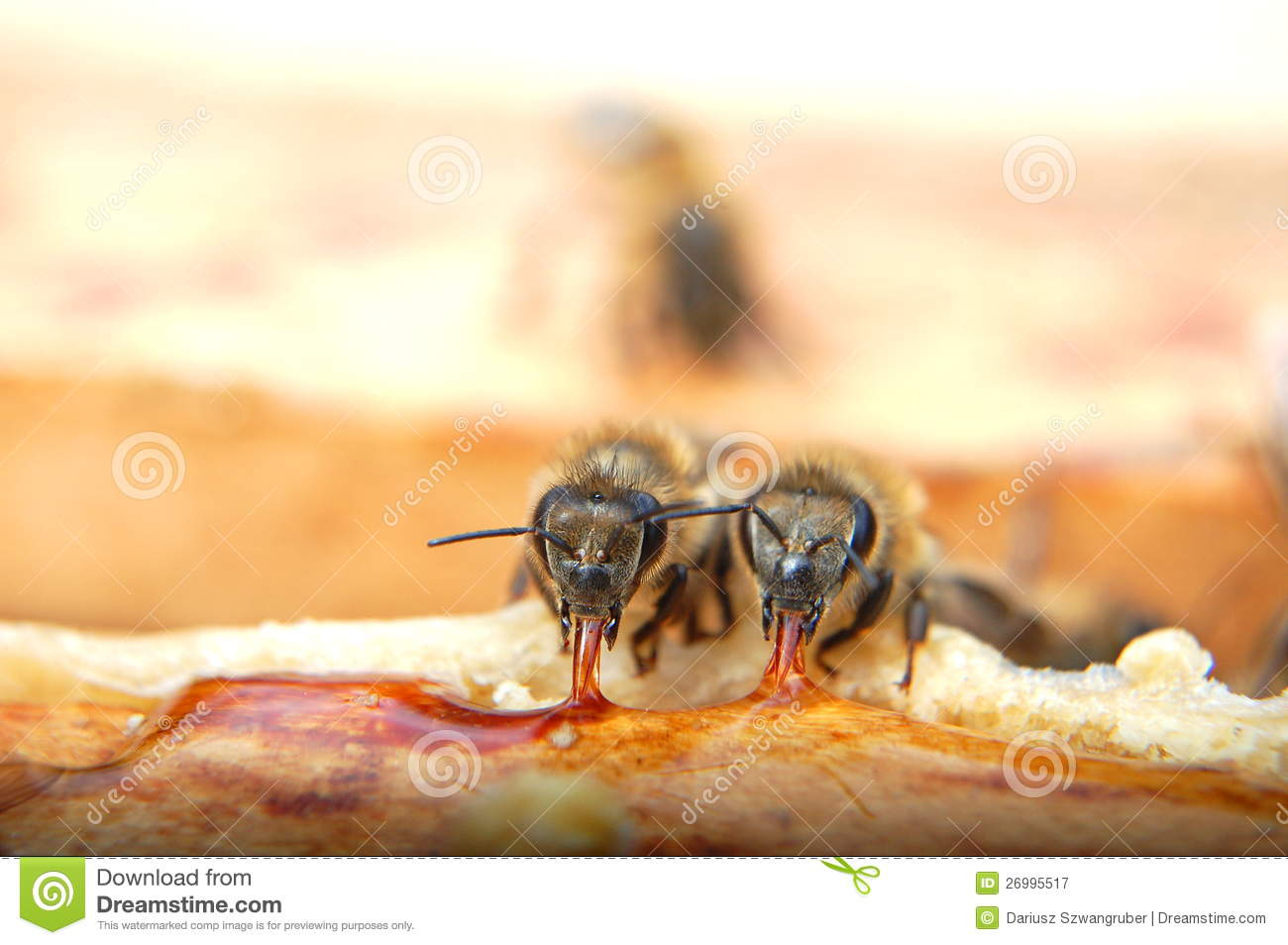 honeycomb drone with Royalty Free Stock Photography Closeup Two Bees Eating Honey Image26995517 on 2014 Ram 1500 Rumble Bee Concept in addition Royalty Free Stock Photography Queen Bee Bee Hive Laying Eggs Beehive Supported Worker Bees Image30903937 moreover Grade Tw likewise Honey moreover respond.