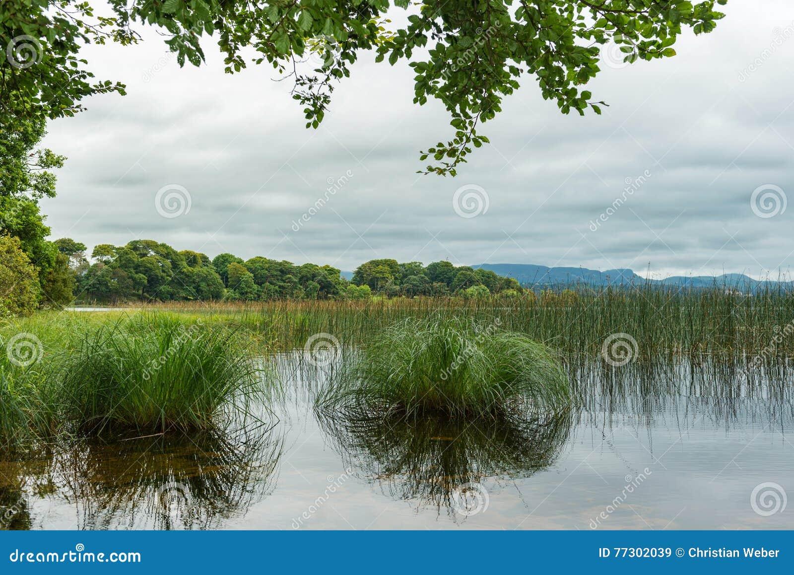 Closeup view of an irish lake