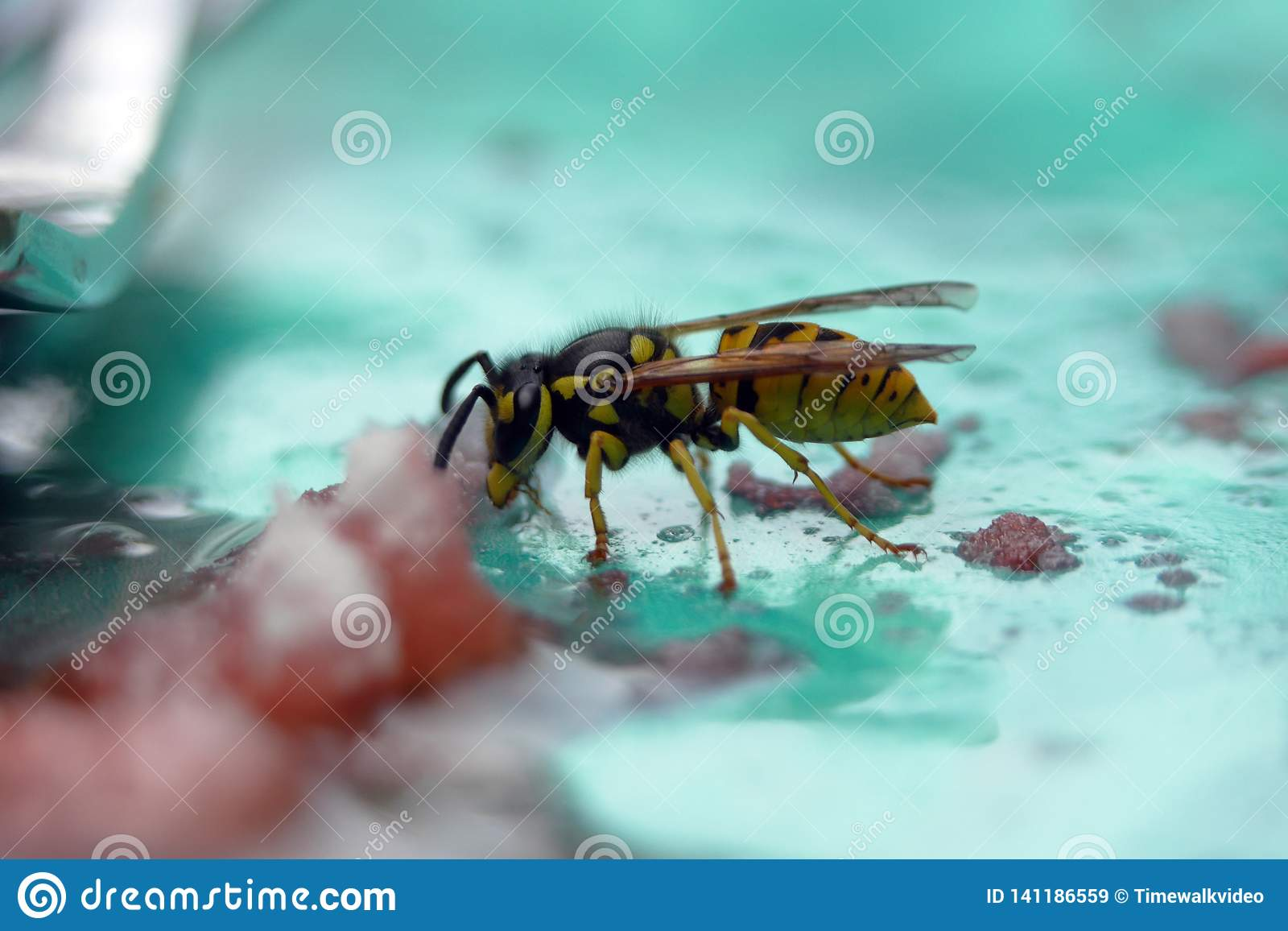 Yellow Jacket Drinks a Sugar Concoction