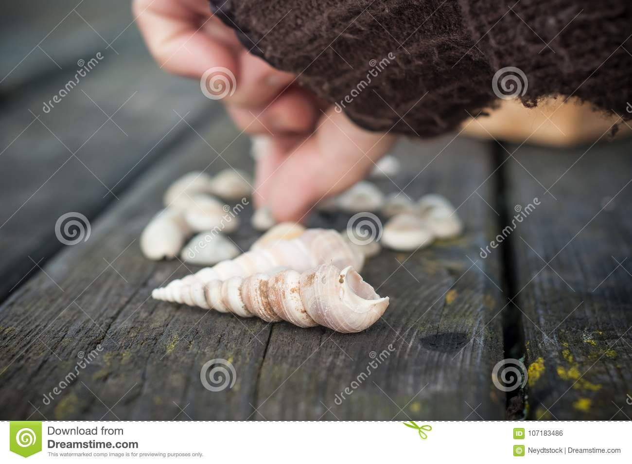 woman hand posing seashell on wooden table stock photo image of